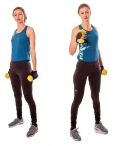 Exercitiul Ciocane pentru biceps