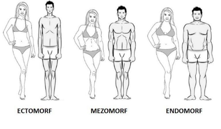 Tipuri de corp